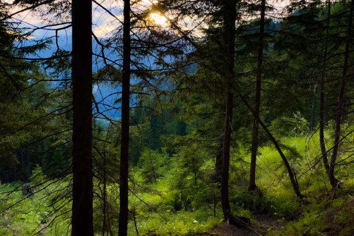 Schöner Abstieg durch den Wald